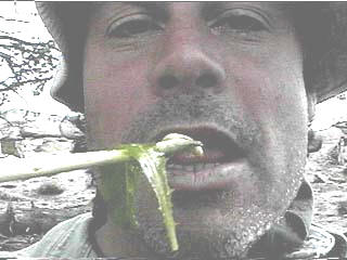 Chopstick bug eater